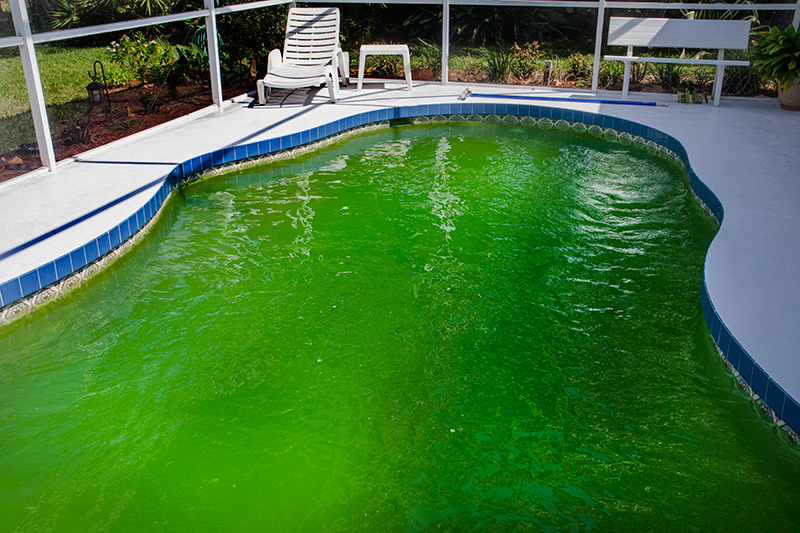 Welcome To Blue Water Swimming Pool Service Dallas Texas